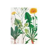 Glued Exercise book , A5, Dandelion , Hortus Botanicus