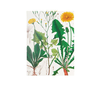 Glued Exercise book , A5,Dandelion , Hortus Botanicus