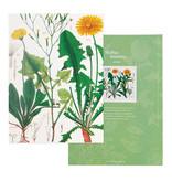 Écriture collée, A5,   Pissenlit, Hortus Botanicus