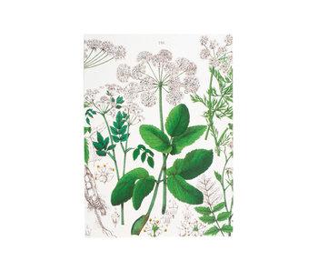 Heft, A5, Holunder, Hortus Botanicus
