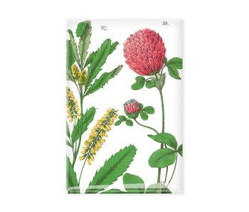Magnet de réfrigérateur,  Fleur de trèfle rouge, Hortus Botanicus