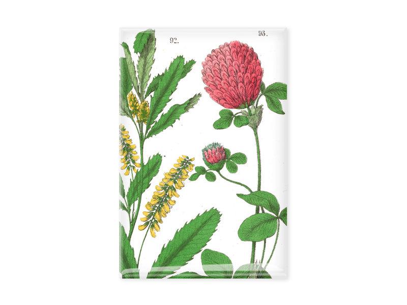 Imán de nevera, Flor de trébol rojo, Hortus Botanicus