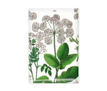 Magnet de réfrigérateur, Feuille de sureau, Hortus Botanicus