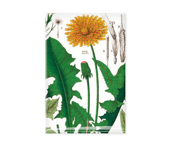 Magnet de réfrigérateur,  Pissenlit, Hortus Botanicus
