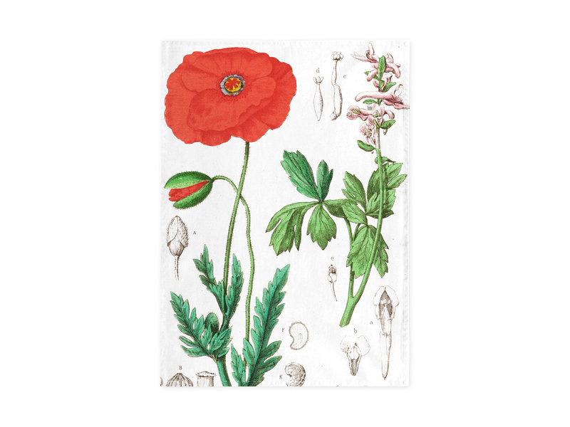Torchon, Coquelicot, Hortus Botanicus