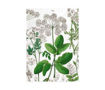 Geschirrtuch, Holunder, Hortus Botanicus