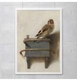 Poster 50x70 cm, Goldfinch, Carel Fabritius
