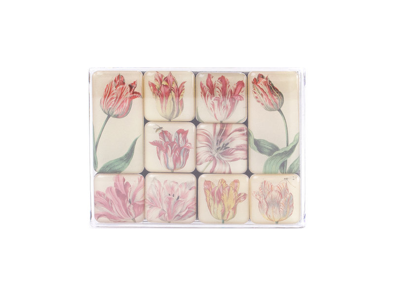 Mini imanes, tulipanes