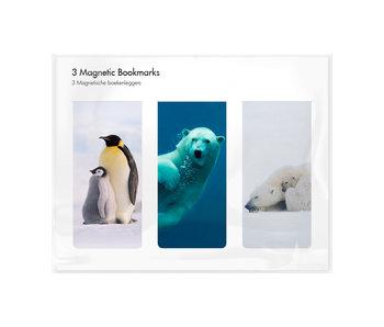 Set van 3, Magnetische boekenleggers , Arctique