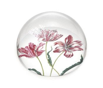 Pisapapeles de vidrio,  Tulipanes, Merian