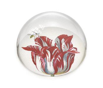 Glaskuppeln Briefbeschwerer, Tulpen Marrel