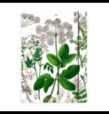 Portfolio elas.closure A4 , Elder Leaf, Hortus Botanicus