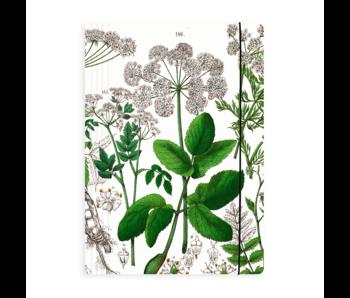Porte-documents avec bande élastique, Feuille de sureau, Hortus Botanicus