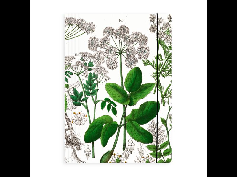 Porte-documents, Feuille de sureau, Hortus Botanicus