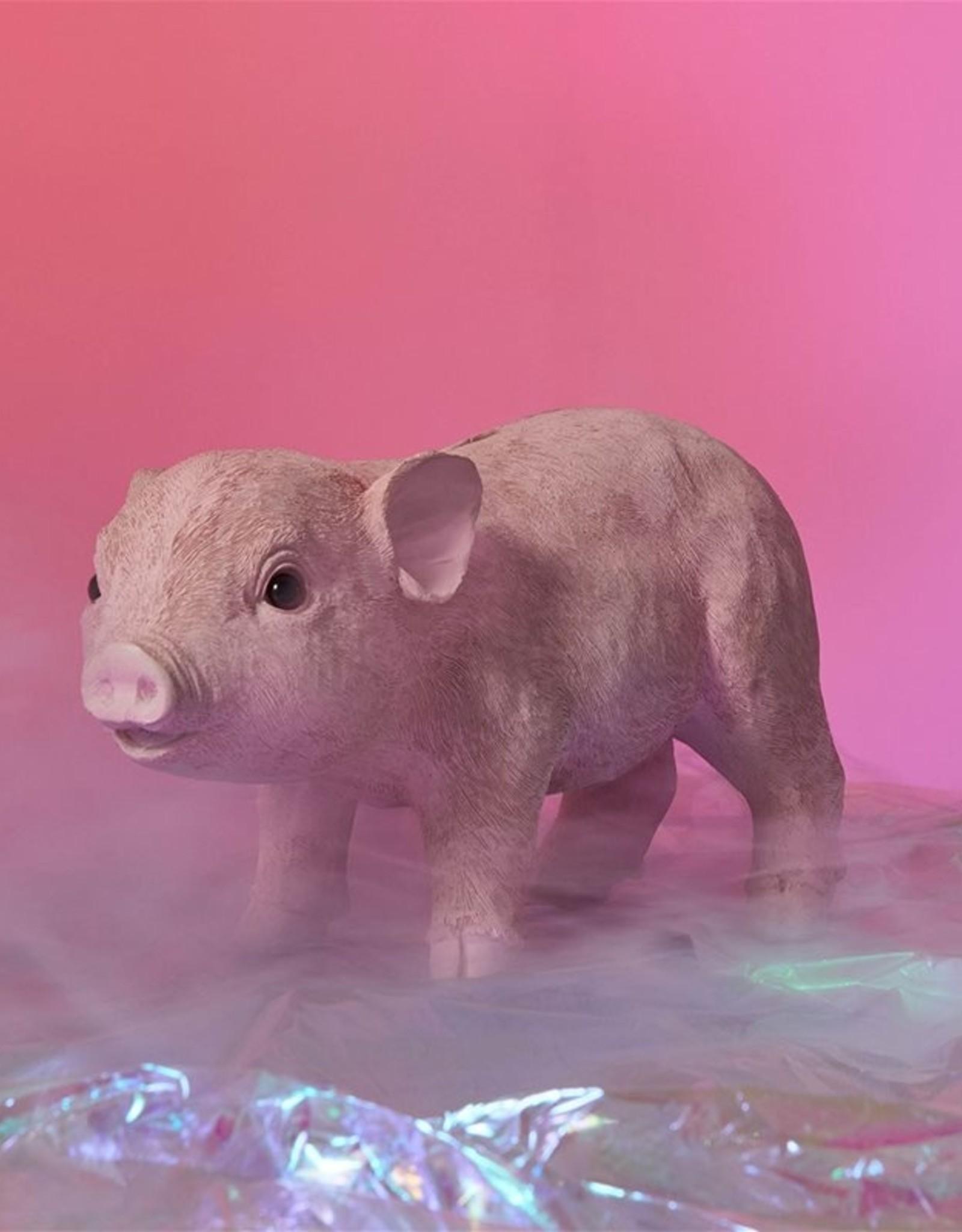 &Klevering Coinbank pig pink