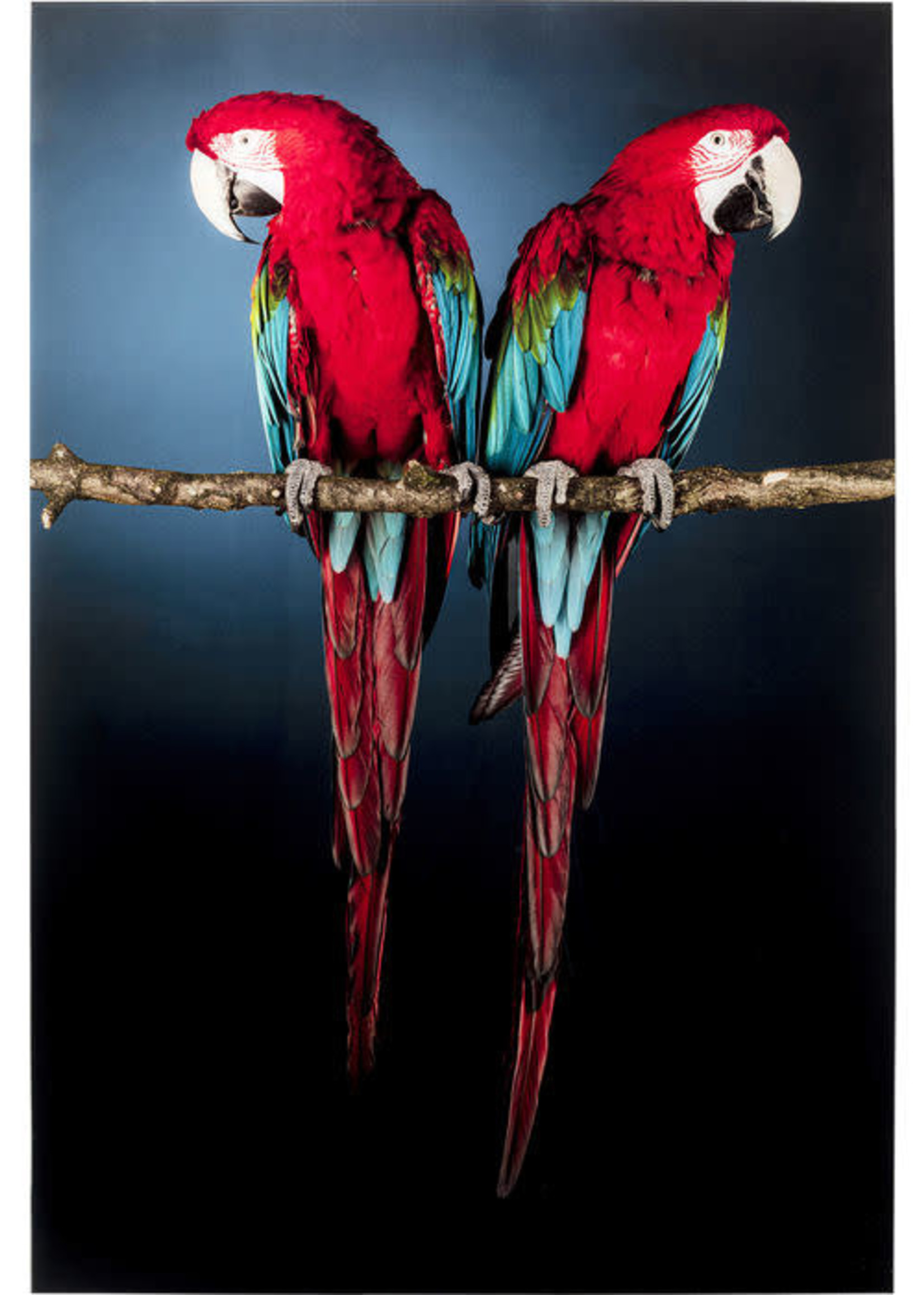 KARE DESIGN Picture Glass Twin Parrot 80x120 cm