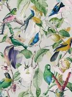 MINDTHEGAP TROPICAL BIRDS