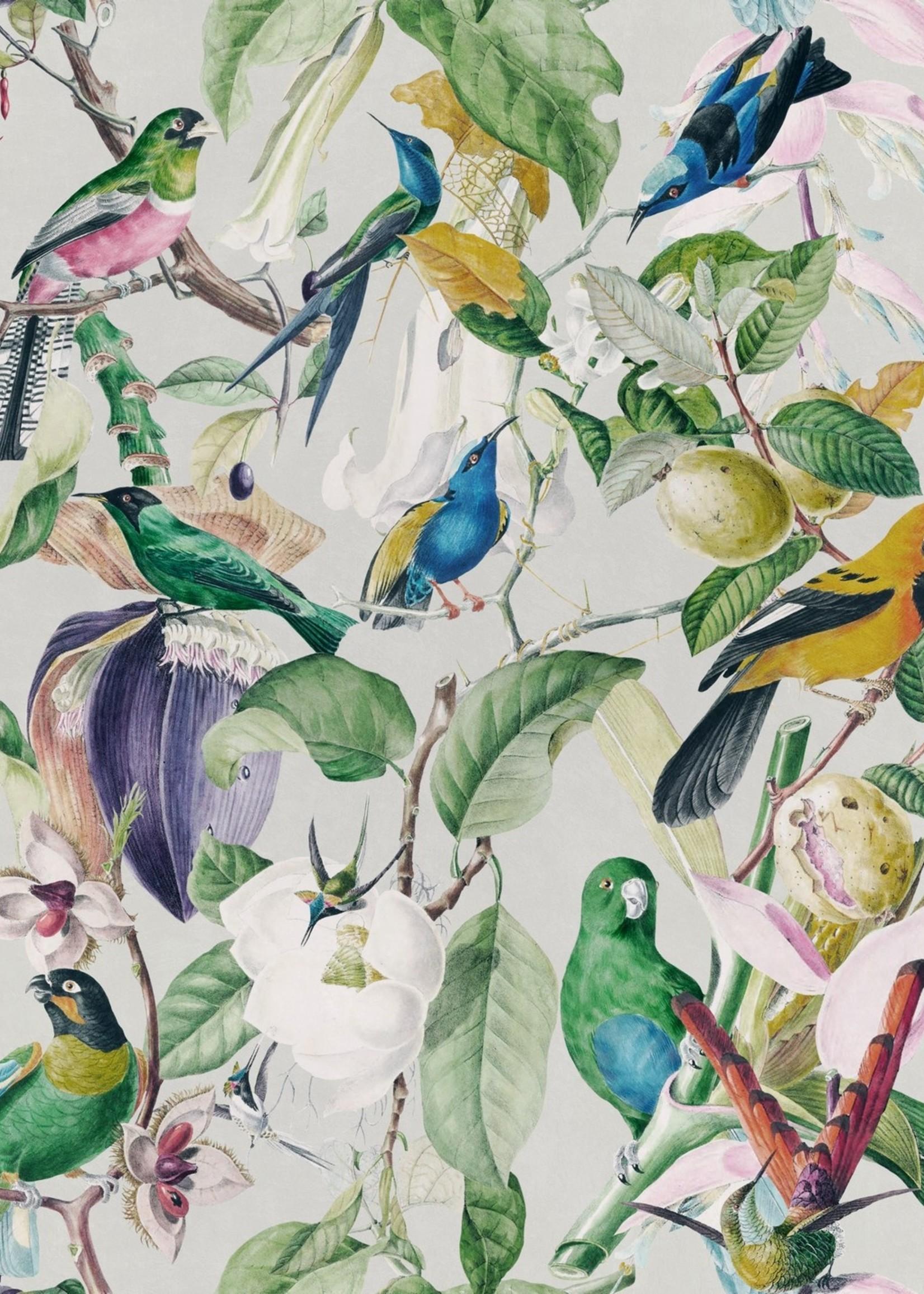 MINDTHEGAP Designer Wallpaper TROPICAL BIRDS
