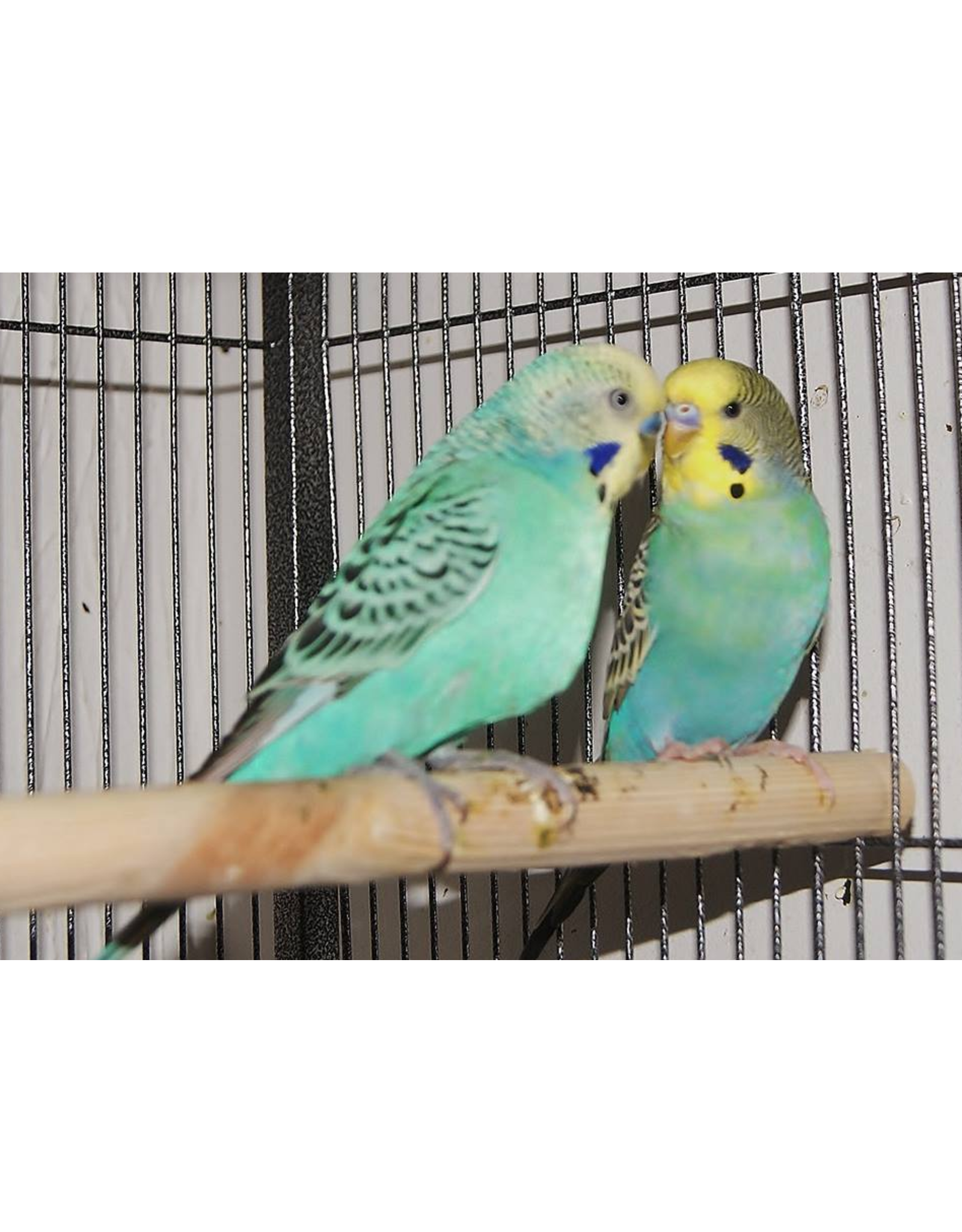 Angell Pets Bird Boarding Per Cage (Up to 4 birds per cage)