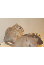 Angell Pets Small Mammal Boarding Each Per Day