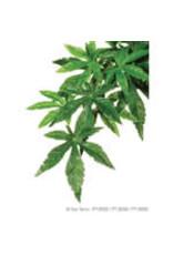 Exo Terra ET Hanging Plant Abutilon