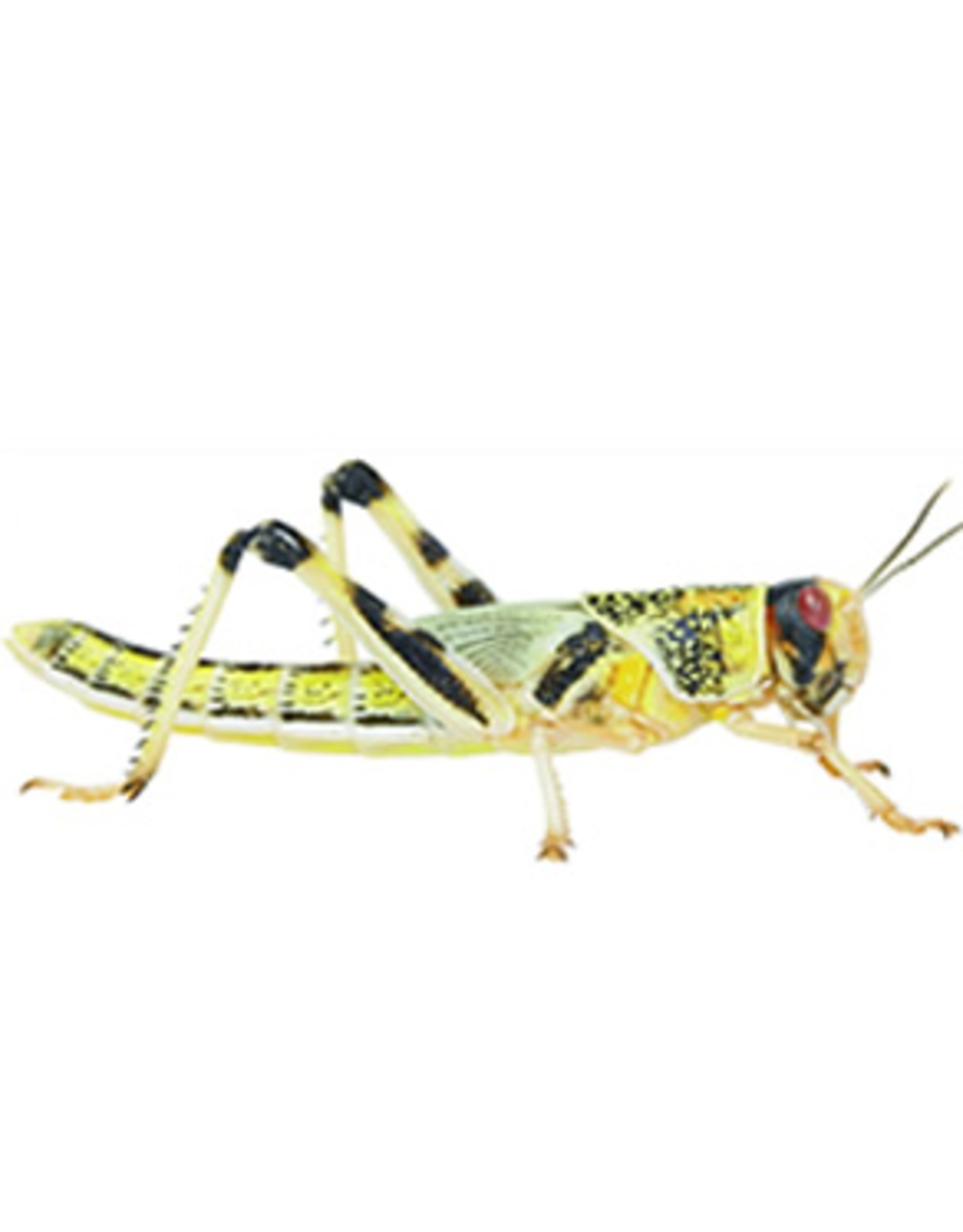 Angell Pets Locust