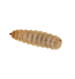 Angell Pets Calci Worm Pre Pack