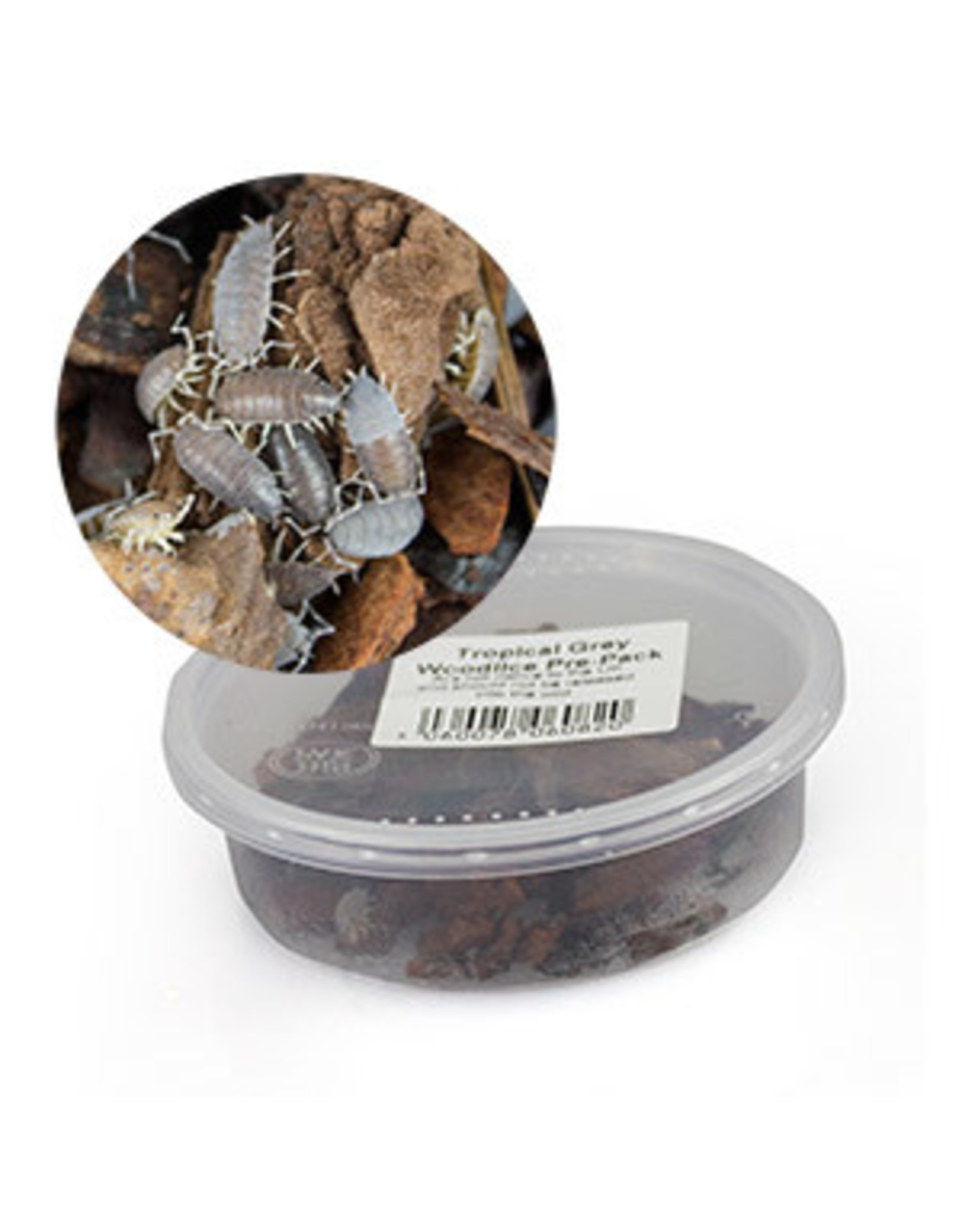 Angell Pets Tropical Grey Woodlice Pre Pack