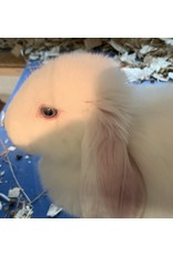 Angell Pets Rabbit Female - Mixed Breed