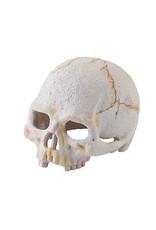Exo Terra ET Primate Skull