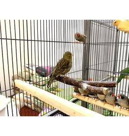 Canary - Green