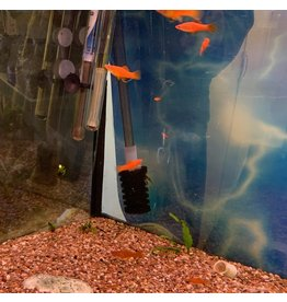 Angell Pets Platys - Red