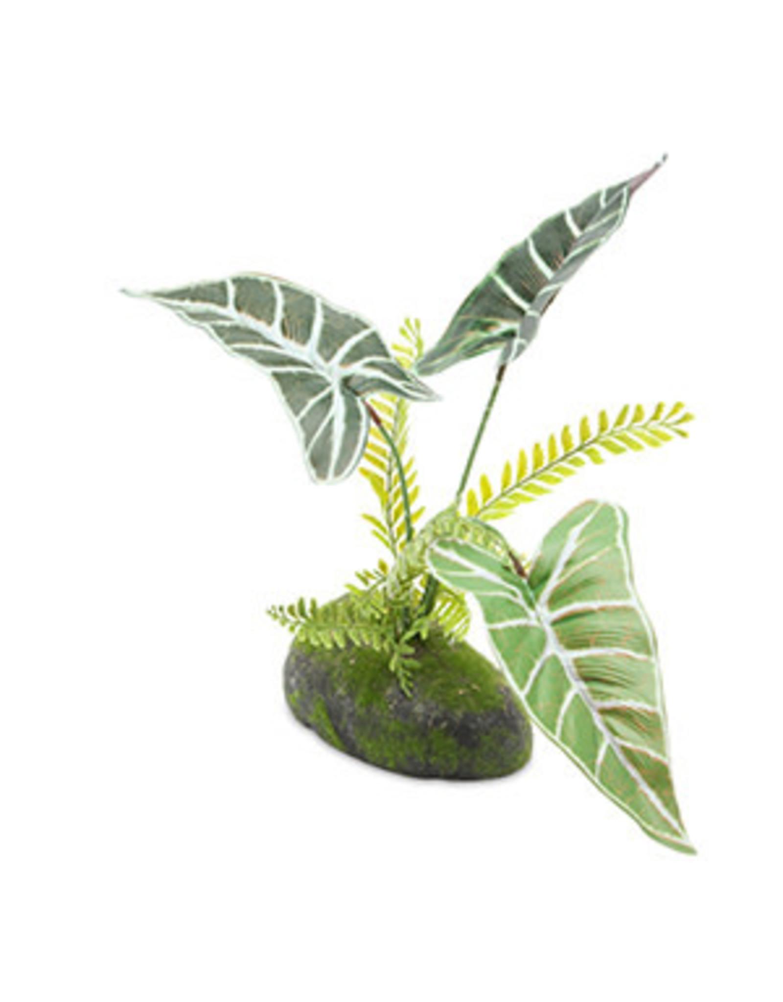 Pro Rep PR Philodendron Red Emerald Plant 30cm