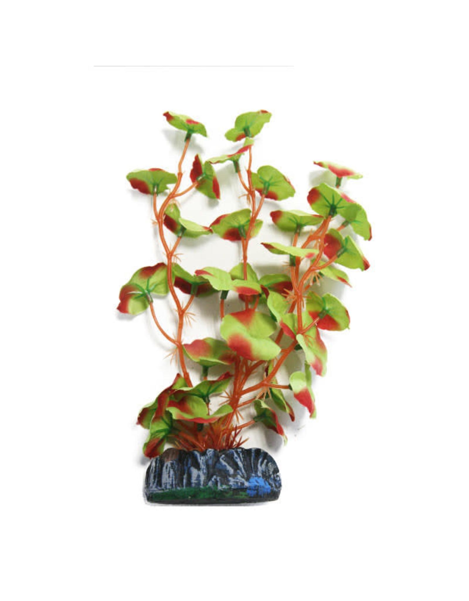 Betta Betta Choice 20cm Silk Red Edged Plant