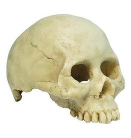 Repti Style RS Human Skull Hide/Ornament