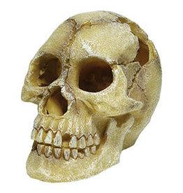 RS Human Skull Hide/Ornament Large