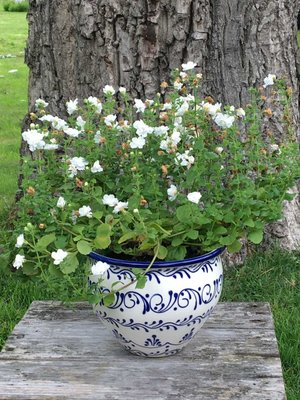 Spanish Flower Pot Blanco Azul