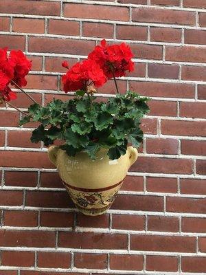 Hanging Flower Pot Cenefa