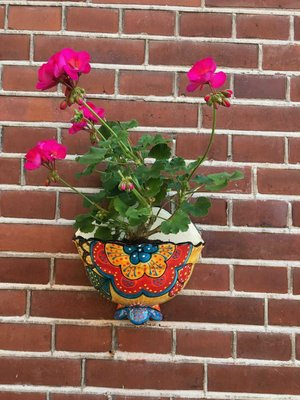 Hanging Flower Pot Amara Small