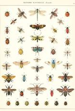 Cavallini Cavallini Insects NHINS
