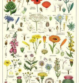 Cavallini Wildflowers WF
