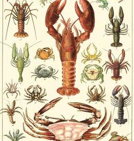 Cavallini Crustaceans CRU