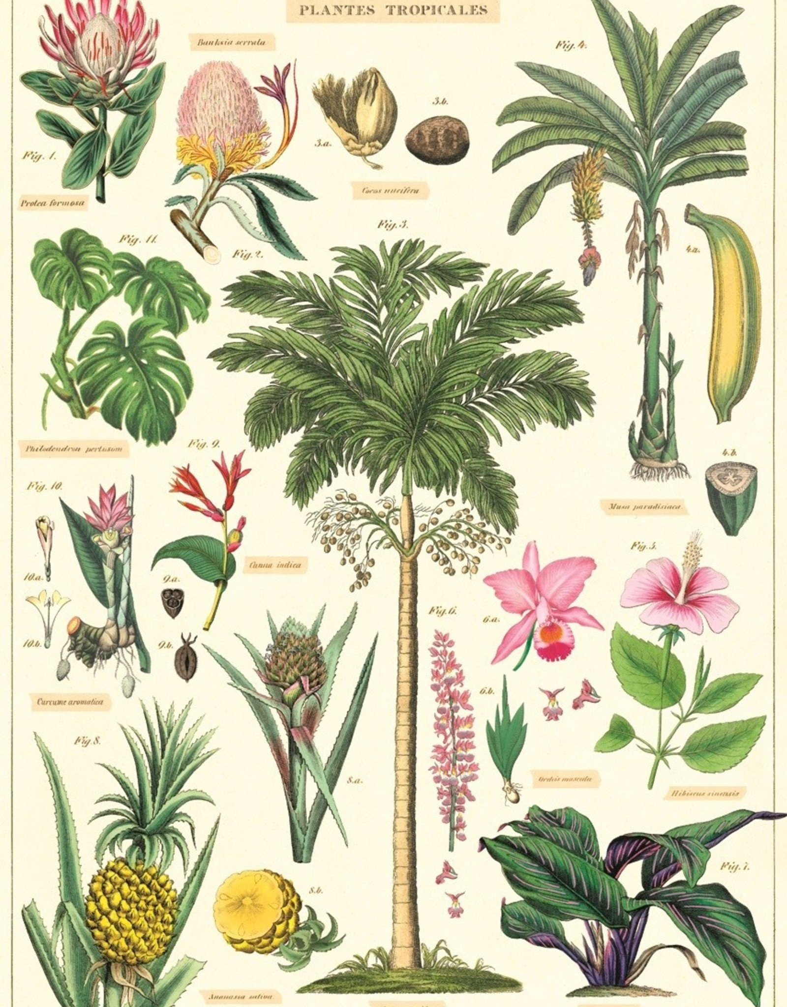 Cavallini Cavallini Tropical plants TROP