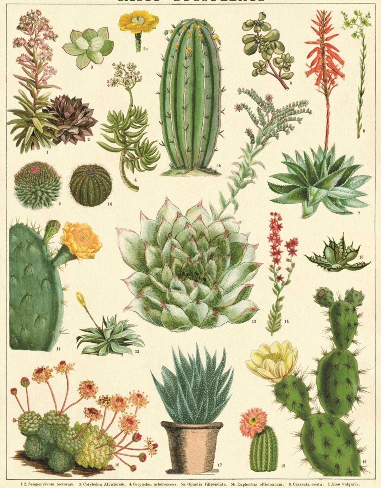 Cavallini Cavallini Cacti&succulents SUC