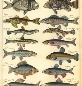 Cavallini Fish NHFISH