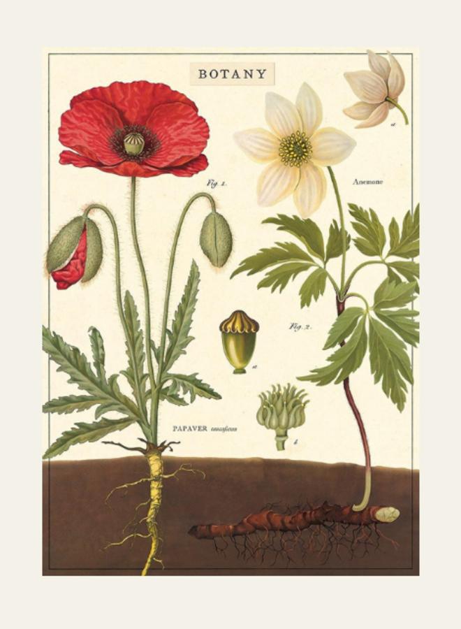 Cavallini Vintage Poster Botany