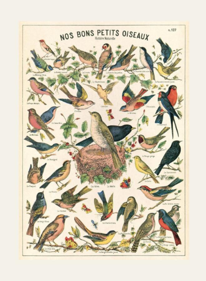 Cavallini Vintage Poster Nos Bons Petits Oiseaux