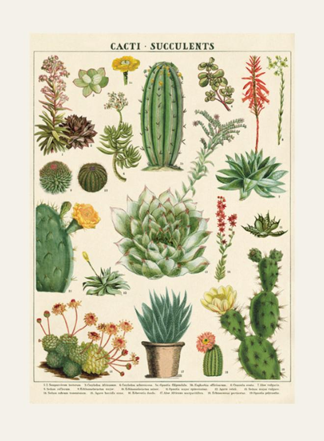 Cavallini Vintage Poster Cacti Succulents