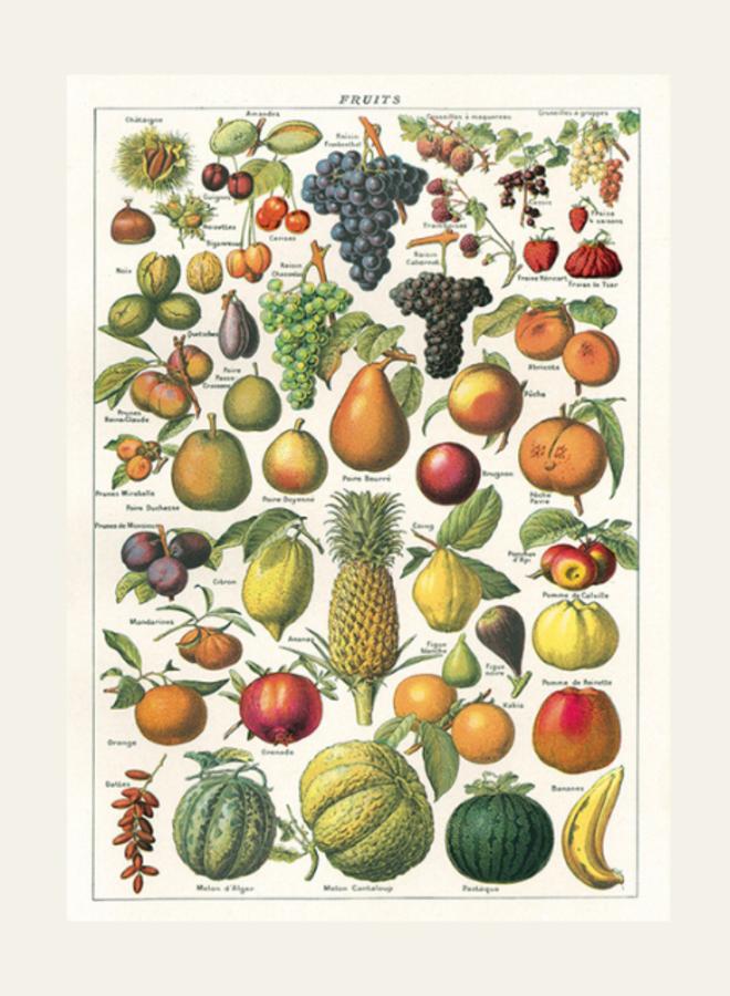 Cavallini Vintage Poster Fruits