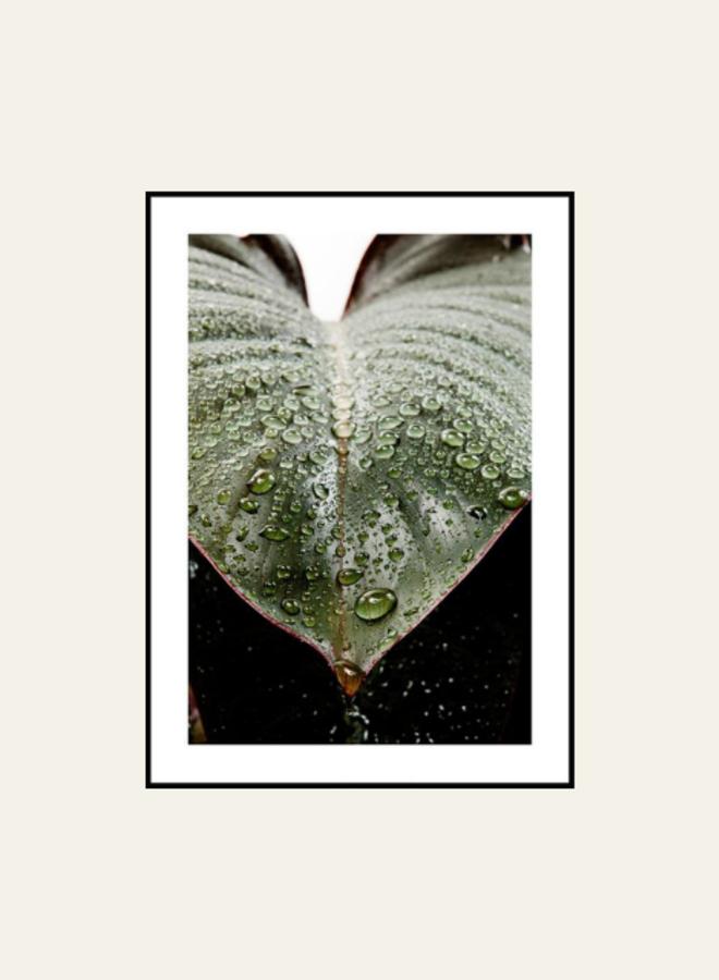 Posterstore Leaf Droplets